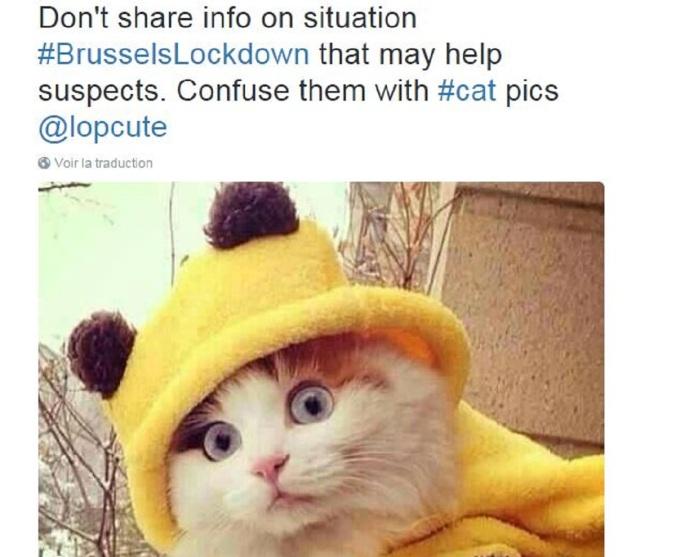 brussels-cat